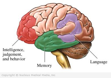 Some Areas of the Brain Affected by Dementia