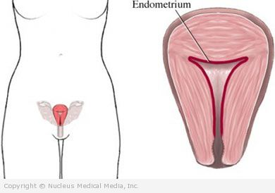 The Endometrium