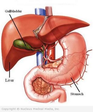 Gallbladder, Liver, and Stomach