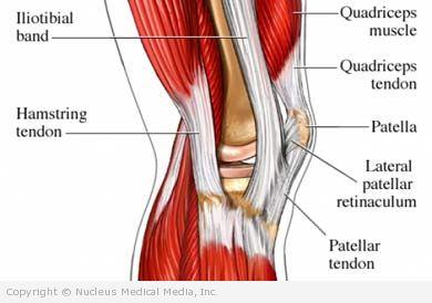 muscles, Cephalic Vein